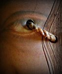 paddy eye
